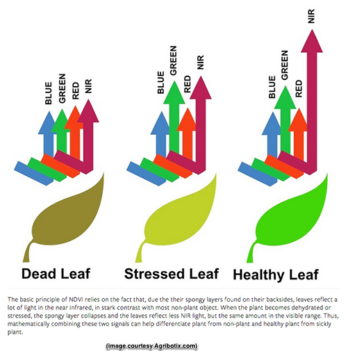 drone leaf health camera infographic