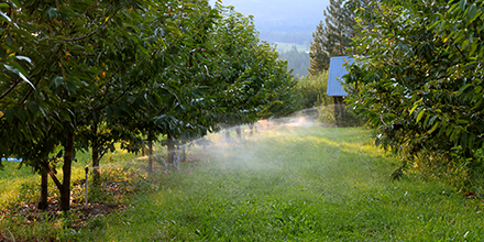 Irrigating an orchard