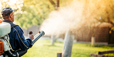 A tractor sprays pesticide in an orchard