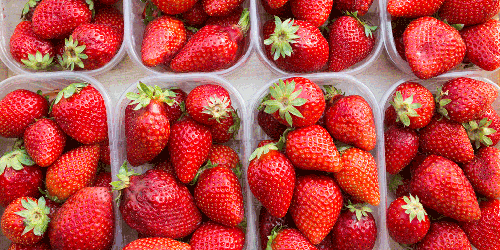 Strawberries packed into plastic clamshells